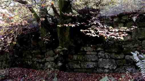 Station 8 am Baum, der der Mauer entspringt